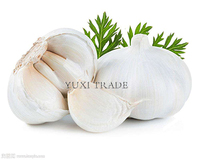 Origin:china Pure white garlic,normal white garlic,red garlic